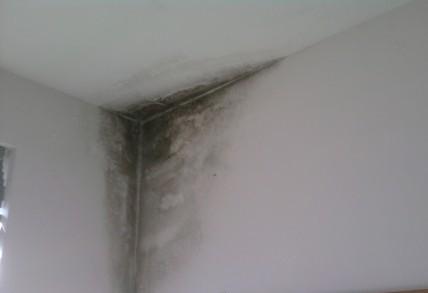 Umidità e muffa in casa